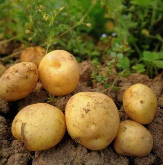 The Fresh Potato with 80g, 100g, 150g, 200g, 250g+