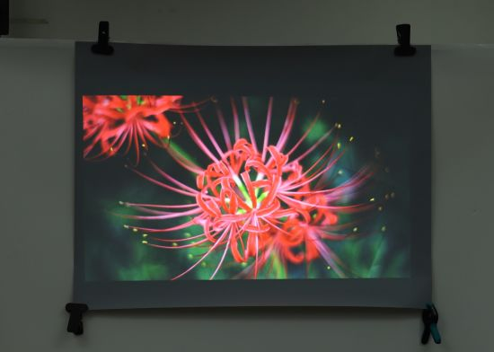 Self-Adhesive Rear Projection Film for Glass/Exhibition/Window