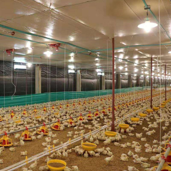 Modern and Advanced Automatic Poultry Equipment for Broiler Chickens