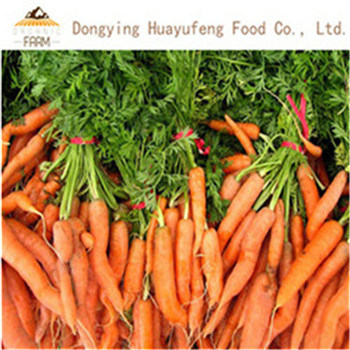 2019 New Crop Chinese Fresh Carrot with Competitive Price pictures & photos