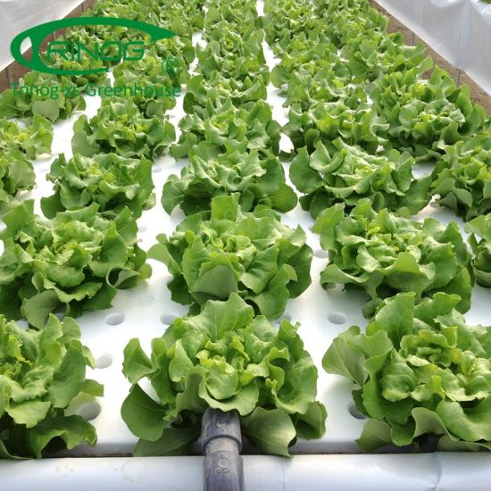 Commercial Greenhouse Hydroponics System Soilless Culture for Vegetables