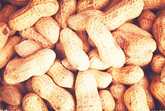 High Quality for Blanched Peanut pictures & photos