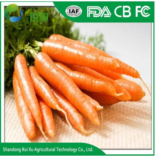 Fresh Carrot/ High Quality/ Best Price