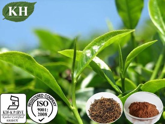 High Quality Black Tea Extract Theaflavines 40% pictures & photos