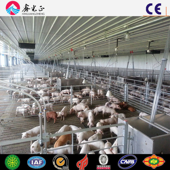 Automatic Pig Farming Feeder System for Pig House