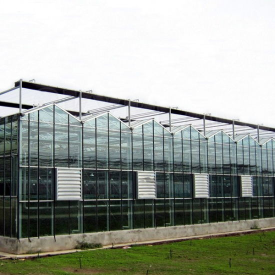 Sell Multispan Agricultural Glass Greenhouse pictures & photos