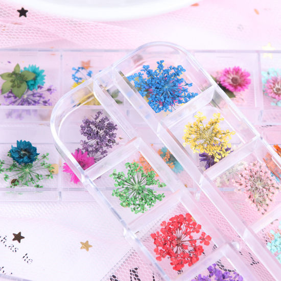 12-Block Dried Flowers Set-2, Nail Beauty, Nail Art, Dried Flower, Nail Flower, Nail accessory, Nail Beauty, Manicure, Nail Supplies, Nail Product, Baby Items