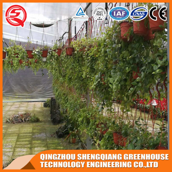 Agriculture Steel Structure Polycarbonate Sheet Greenhouse for Vegetable pictures & photos