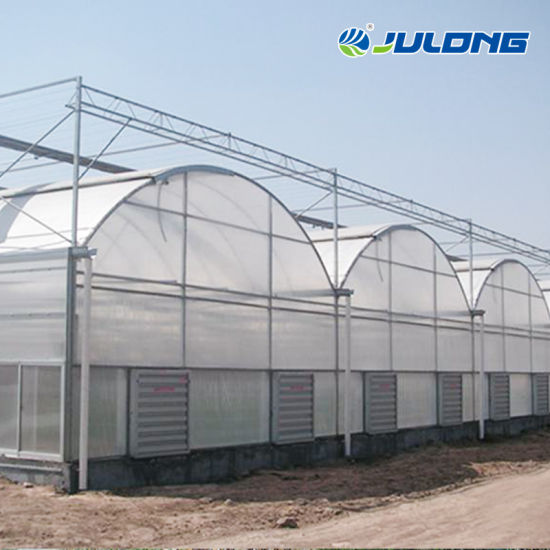 Low Cost Steel Structure Arched Multi Span Flower Green House