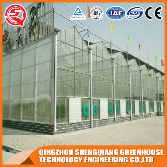 Agriculture Steel Structure PC Sheet Greenhouse for Fruit/Vegetables/Fruit