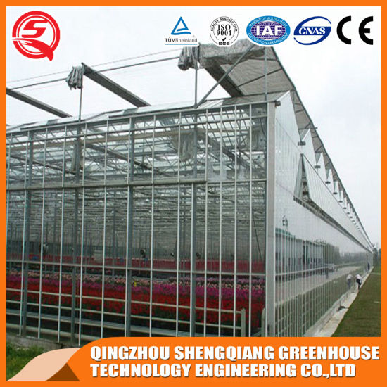 Multi-Span Steel Structure Polycarbonate Sheet Greenhouse for Vegetable/Fruit