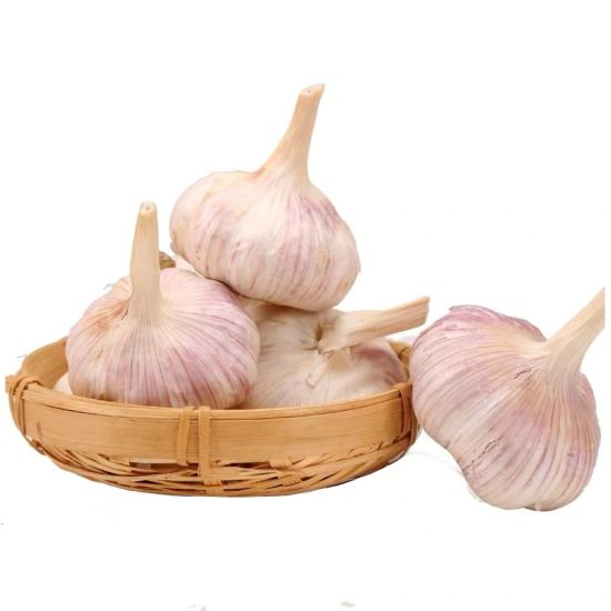 2019 New Crop Fresh Garlic/Pure White Garlic with Purple Skin