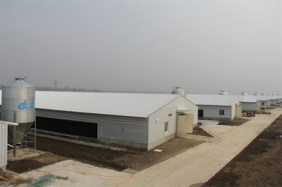 Closed Layer Chicken House /Poultry Shed (KXD-SSB64) pictures & photos