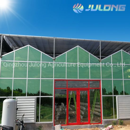 China Venlo Type Tempered Glass Cover Commercial Greenhouse for Lettcue Tomato