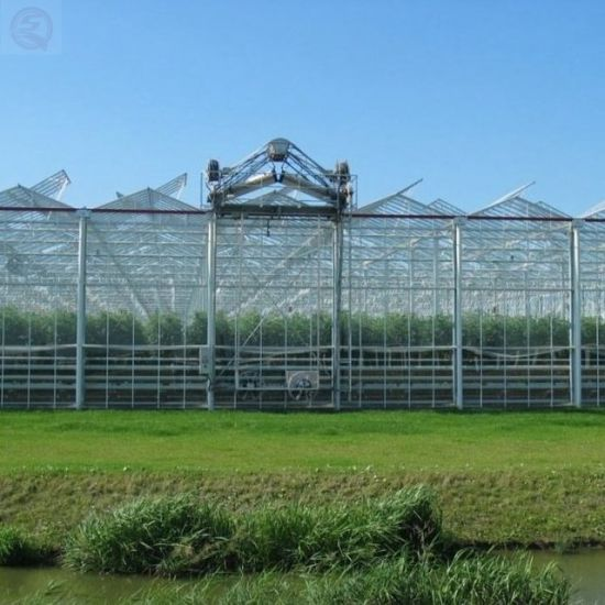 China Agriculture Multi-Span Tempered Glass Greenhouse Vertical Farming Companies
