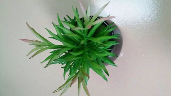 Best Selling Artificial Plants Succulent of Gu20170217140847 pictures & photos