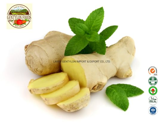 New Crop Chinese Fresh Ginger and Air Dried Ginger From Professional Factory Meet EU Standard
