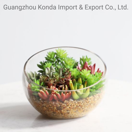 Mix Japanese Style Ornament Varieties Succulent Plants
