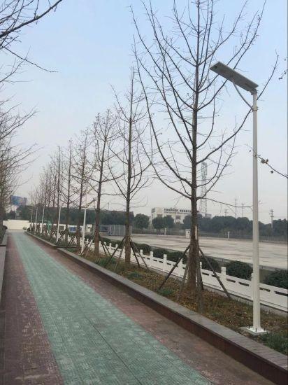 Outdoor Solar Lights LED Street Light Energy Saving with PIR Sensor