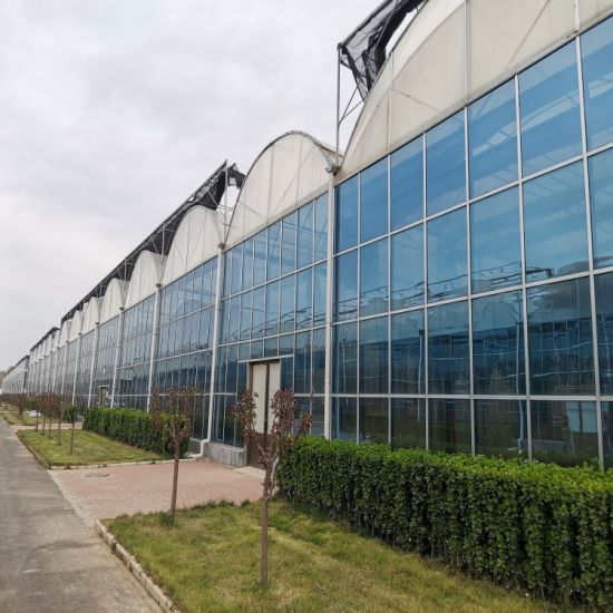 Functional Agricultural Glass Greenhouse with Cooling System
