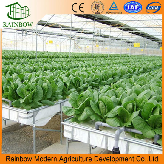 Remarkable Hydroponics And Commercial Greenhouse For Desert And Semi Arid Home Interior And Landscaping Oversignezvosmurscom
