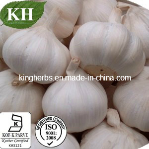 China Natural Garlic Extract GMP Factory pictures & photos