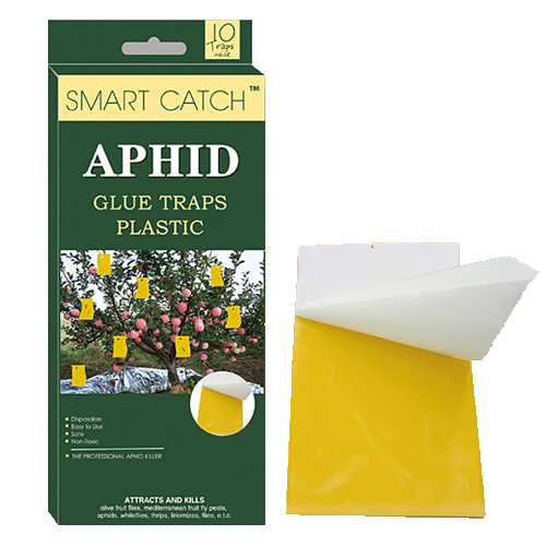 Insect Glue Traps /Plastic Board Aphid Glue Traps/Pest Catcher pictures & photos