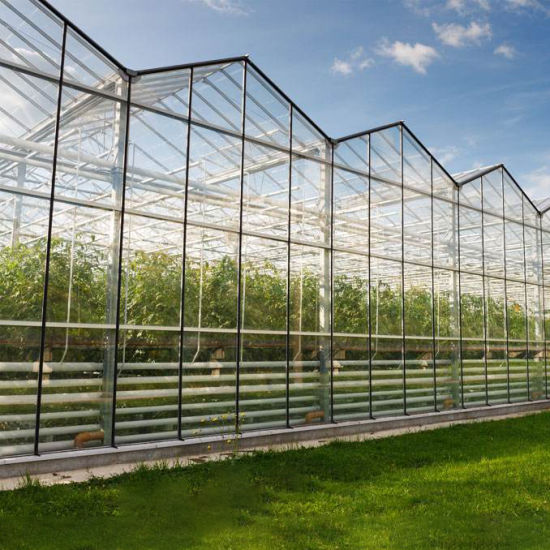 Hydroponics System Glass Greenhouse for Sale