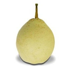 Export New Crop Fresh Good Quality Ya Pear pictures & photos