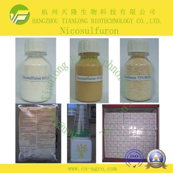 Nicosulfuron (95%TC, 75%WDG, 40OD)-Herbicide