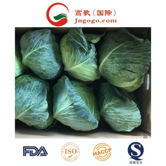 China New Crop Fresh Green Cabbage Health Vegetables Supplier pictures & photos