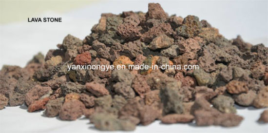 High Quality Culture Nitrifying Bacteria Used Lava Stone