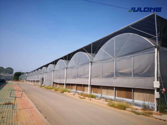 Commercial Agricultural Multi Span Plastic Film Greenhouse with Cooling Shading System for Vegetables Flowers