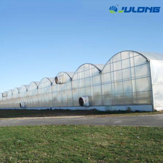 Multi-Span Plastic Po PE Film Greenhouse for Vegetable Flower Market House