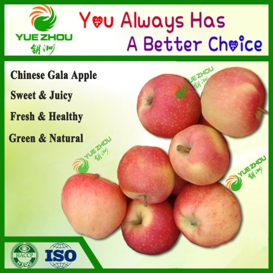 Supply New Crop Sweety Gala Apple Red