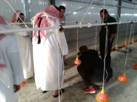 Qatar Fully Environment Controlled Whole Poultry Farming