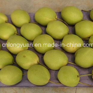 Hot Selling New Crop Fresh and Sweet Shandong Pear pictures & photos