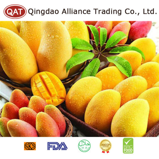 High Quality Fresh Whole Mango with Good Price pictures & photos