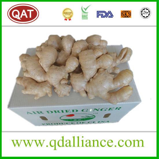 2017 New Crop Ginger Hot Sales pictures & photos