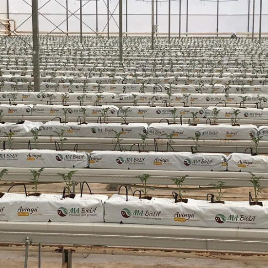 Efficient Polycarbonate Greenhouse and Cocopeat Hydroponic for Tomato Growing