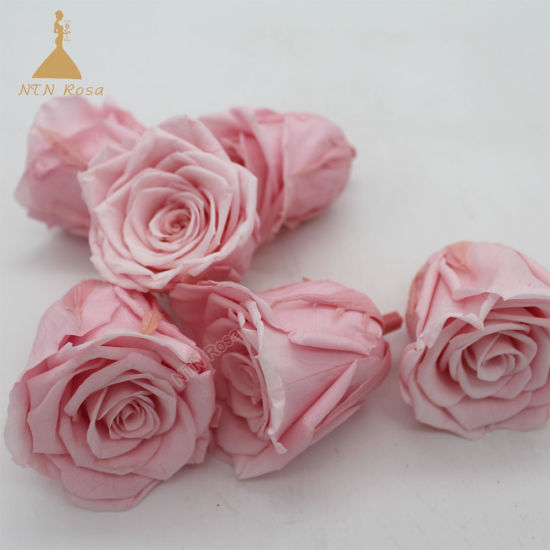 Wholesale 5~6 Sakura Pink Eternal Preserved Longlasting Rose Flowers for Home Wedding Decoration pictures & photos
