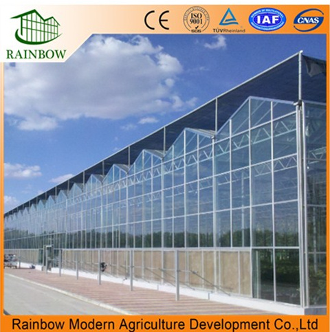 Commercial Venlo Type Glass Greenhouse for Strawberry