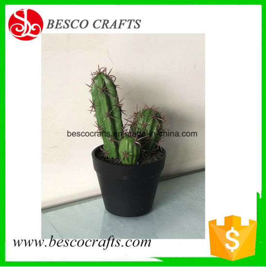 20cm H Small Opuntia Bonsin in Plastic Pot pictures & photos