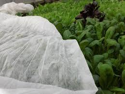 Spunbond Non Woven for Plant Cover