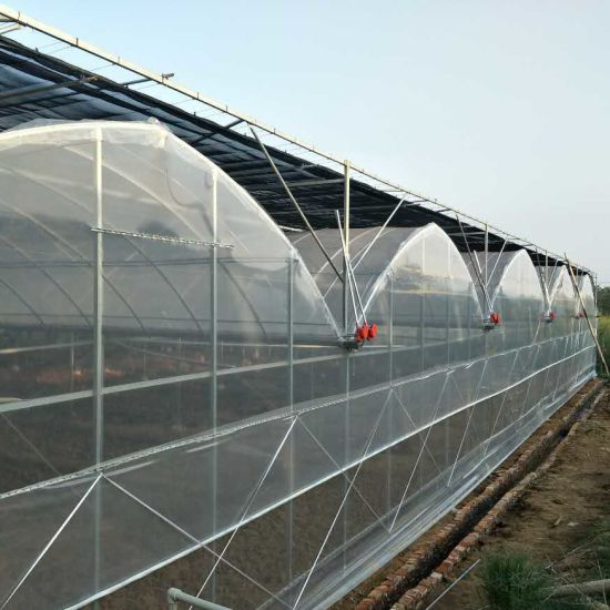 Agricultural Commercial Multi-Span Plastic Film Greenhouse for Vegetable Growing