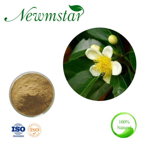 Chinese Organic ISO/Kosher Manufacturer Supply Camellia Japonica Flower Extract for Expelling Wind and Wet