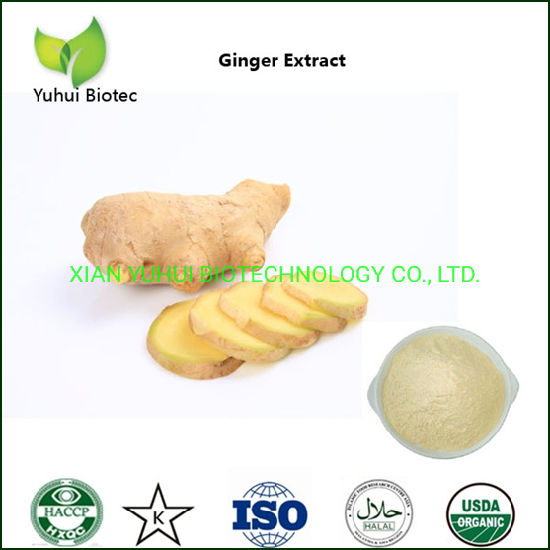 Water Soluble Dry Ginger Extract Powder