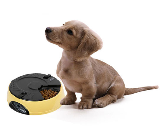 6 Meal LCD Automatic Pet Feeder for Dog or Cat pictures & photos