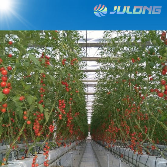 Agricultural Low Cost 10 mm Poly Greenhouse with Hydroponic Growing System