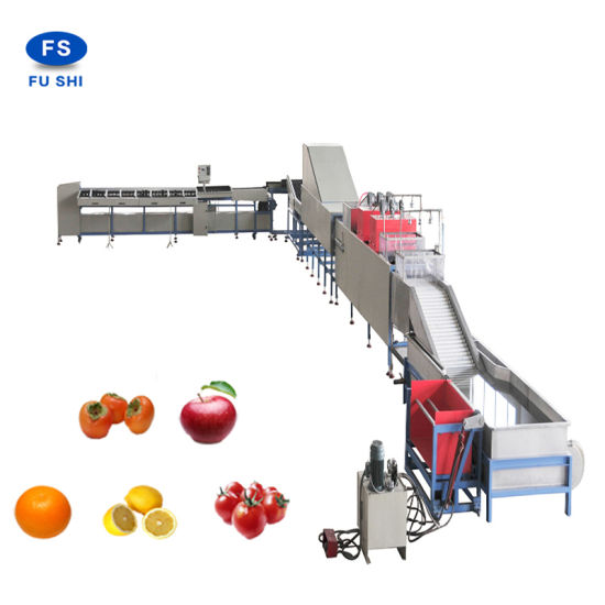 China Citrus Fruit Washing Waxing and Sorting Machine with Ce ...